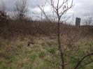 Carnivora (Otter, Fox etc) :: Ferel cat