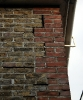 Chiroptera (Bats) :: Pipistrelle roost site