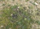 Lagomorpha (Rabbits, Hares, etc.) :: Rabbit miden