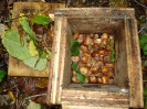 Rodentia (Mice, Voles etc) :: Food cache