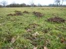 Insectivores (Shrews, Moles, etc.) :: Mole hills